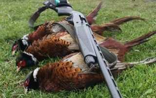 Что значит «заряжать фазана» на жаргоне