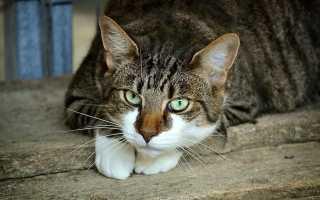 Следователи не могут доказать вину наркоторговца из-за сбежавшего кота