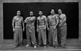 Все о современных бандах и наркокартелях Мексики