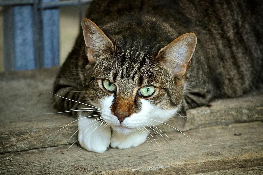 кот наркокурьер